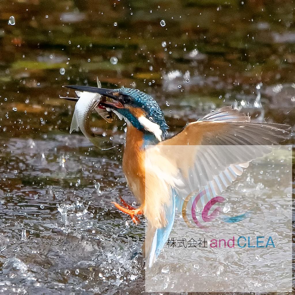 カワセミなど野鳥の写真撮影スポット 熊本市