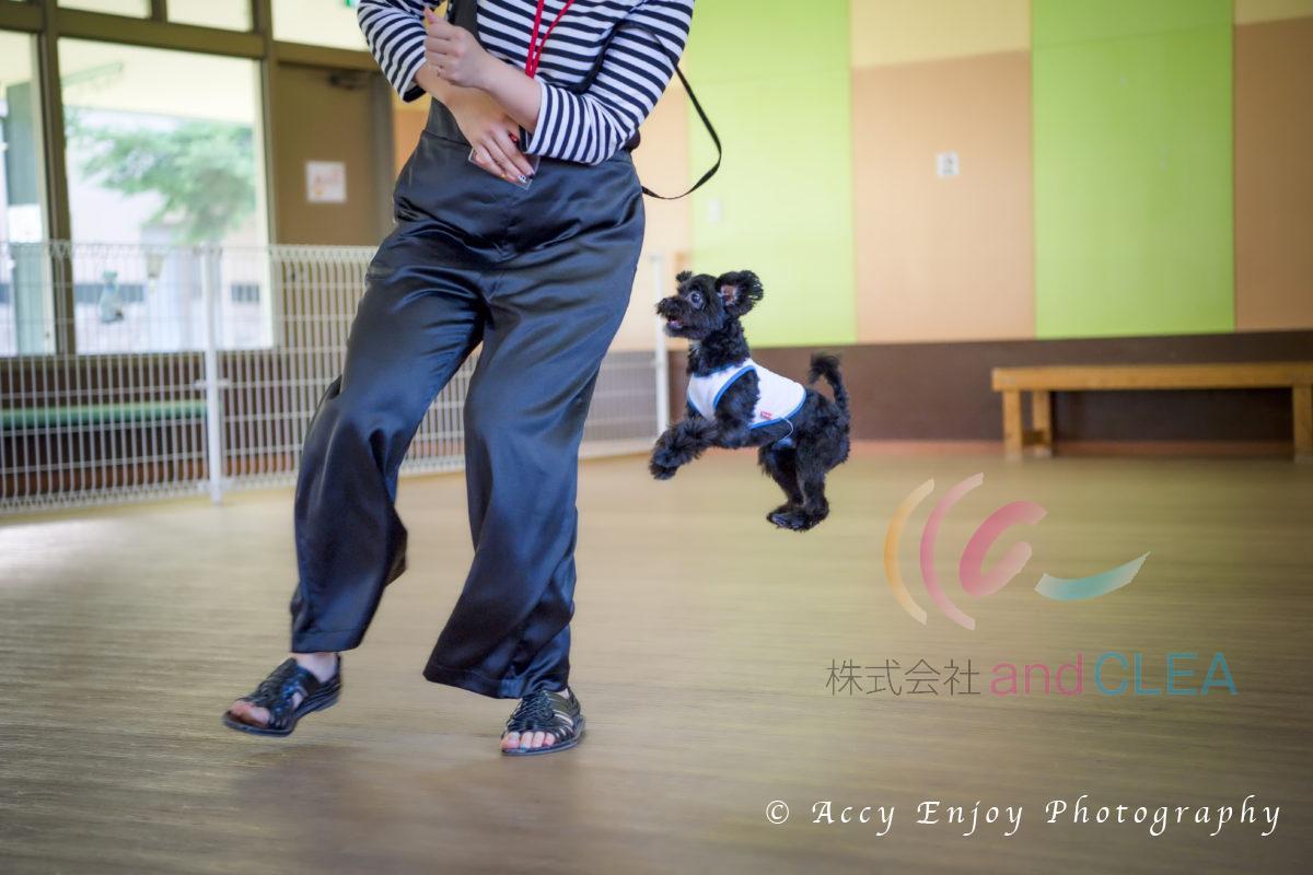 ペット同伴 宿泊 屋内ドッグラン 湯布院ガーデンホテル  Photo by ACCY