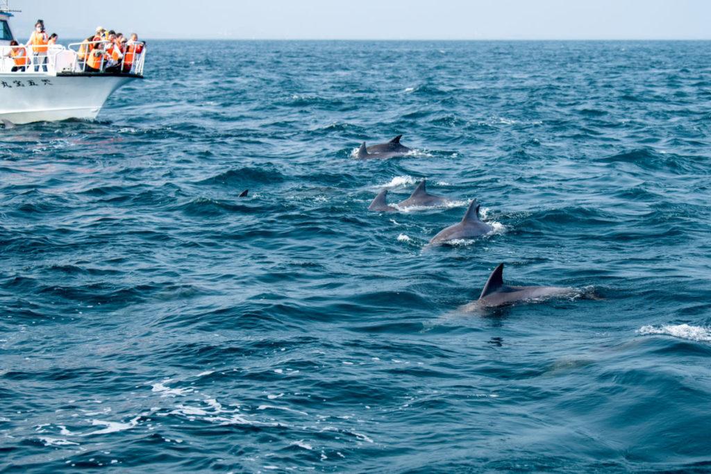 出張写真撮影Accy @watanabeakr イルカウォッチング 熊本の海で写真撮影 上天草から足を伸ばし五和沖合でイルカ撮影